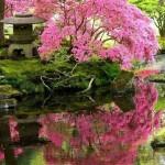 Décoration des jardins japonais - 8