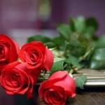 Fleurs Rouges Décoratives - 9
