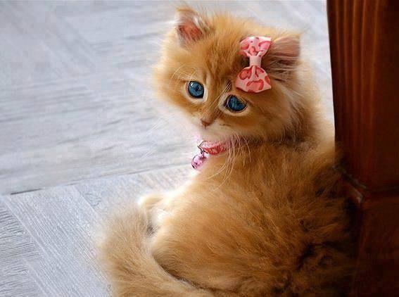 صور جميلة - القطة الجميلة