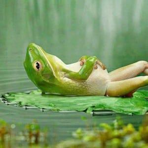 صور جميلة - ضفضع ياخذ حمام شمس