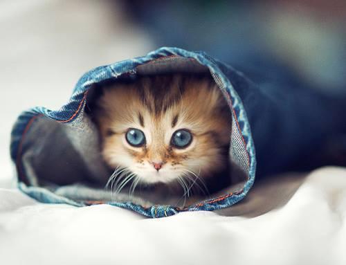 صور جميلة - قطة مختبئة